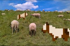 The Sheep /3